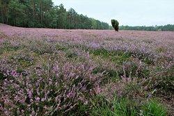 Klein Buenstorfer Heide
