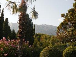 Пальмы, горы, лагерстермия
