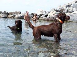 Cani in ferie.
