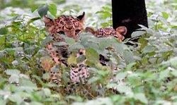 Mom and Son at Jhalana Jungle Safari by World of Wilders