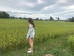 The fields Hi showed me