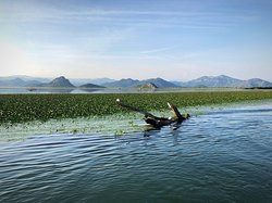 Lake Skadar is really beautiful - and Zabes is the company to show you it's best angles!