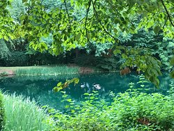 Pond in back of the library
