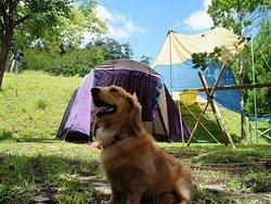 テント区画の犬宿泊OKの場所の雰囲気 区画内には水道・電気(有料)・BBQ台・椅子が備わっていますし駐車場が1台停めれて荷物の搬出が楽です テントを張ってゆっくる遊べます