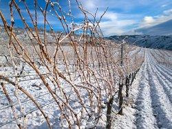Viñedos en altura en invierno en la Contraviesa - Alpujarra