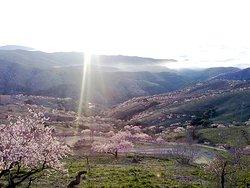 Vista desde la Bodega La Divisa de los almendros en flor