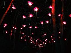Blenheim Palace Christmas Lights Trail