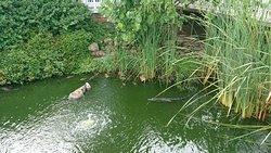 crocodiles pond