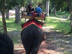 A dorso di elefante si attraversa per circa 20 minuti la foresta prima di arrivare al sito vero e proprio