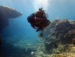 沖縄でダイビングなら  サニーズダイブ沖縄でダイビングなら  サニーズダイブ