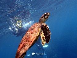 沖縄でダイビングなら  サニーズダイブ