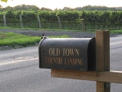 The mailbox with the vineyards in the background.