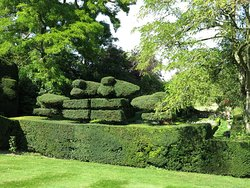 beautiful topiary...