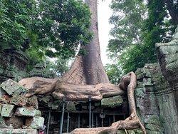 Grosse radici di albero hanno evidentemente inglobato il sito archeologico