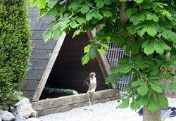 Das ist im Wild und Freizeitpark zu sehen....