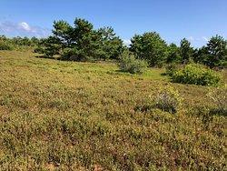 Cranberry bogs