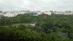 Garden view as seen from 17 floor