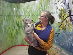 Cuddling a koala - 30 dollars