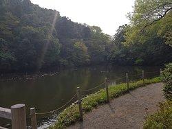 Η ομορφη λιμνη του παρκου!