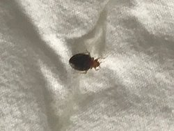 I woke up in the morning and found bedbugs in my bed. I was bleeding from bites. I am very disgusted and grossed out by this. I have never had bedbugs in a hotel room until now. The hotel gave me a full refund for the one night stay. I will NEVER stay at this hotel again.