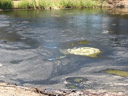 Methane gas bubbling out of the tar pits