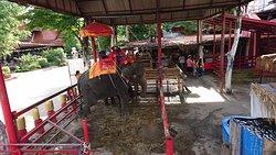 Ayothaya Elephant Villageの写真