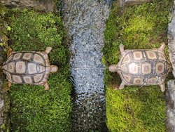 Tortoise Fountain