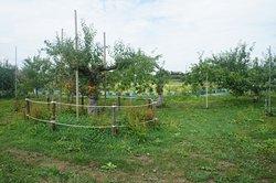 いたるところにリンゴの木が見えました 花みたいできれいです