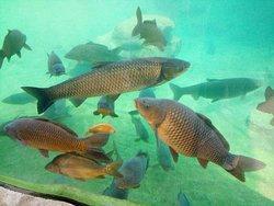 Un aquarium de poissons