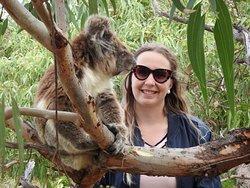 Meet the friendly koalas at Mikkira Station