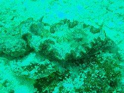 Diving off Sepanggar Island