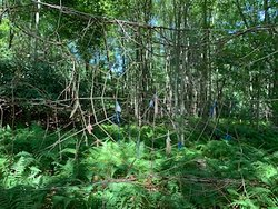 Giant web in the Discovery Trail's fairy garden
