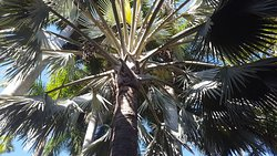 Tall Palm Trees offer shade during the hot hours of the day.