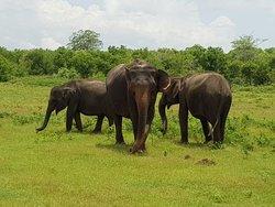 Udawalawa Safari