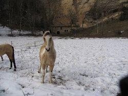 Les chevaux à la ferme du Gros-Louis