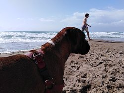 Paradise dog beach