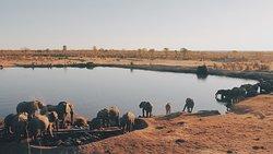 Elefanti al pozzo
