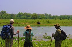 The Chitwan Jungle Guides (Crazy Tiger's Trek & Tours)