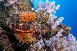 Ocean Spirit Dive Center