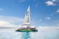 Island Routes Caribbean Adventures - Ocho Rios
