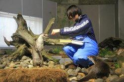 Aquamarine Inawashiro Kingfishers Aquarium