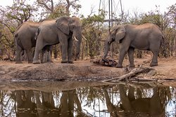 Elephants visiting a watering hole