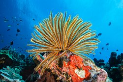 Untouched coral reefs