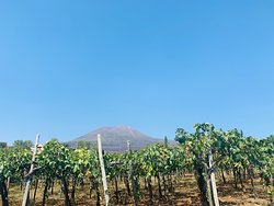 Pompeii and Vesuvius Winery.  Private tour of history, culture and good wine.  this is just one of our private tours.