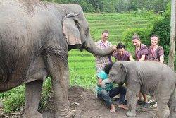 Doiinthanon Elephant Sanctuary