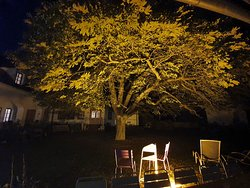 Stimmungsvoller Kastanienbaum