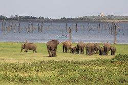 kaudulla national park srilanka