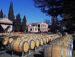Terrazas de Los Andes.  Tour do Vinho