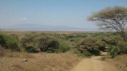 Diverse habitat with wooded areas, savannah, marshlands and lake.