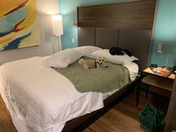 Loved this new hotel for me and my puppy